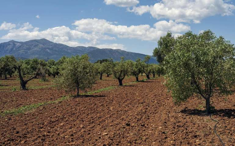 Pruning as a harvesting opportunity